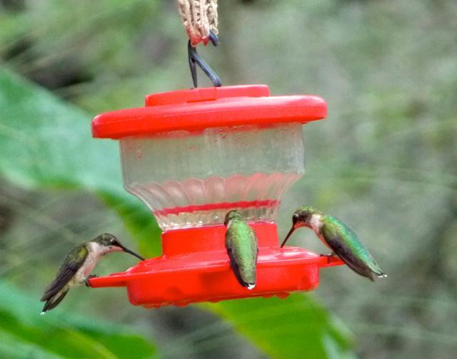 Hummingbirds from Patty Smith's RV #219